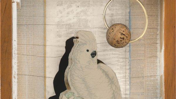 Cacatúa Juan Gris n.º 4. Joseph Cornell