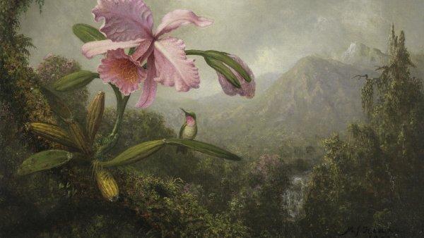 Orquídea y colibrí cerca de una cascada. Martin Johnson Heade